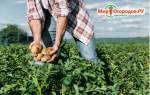 Как подкислить почву для комнатных растений