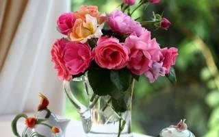 Роза пустила росток как посадить