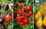 Лучшие сорта сладких томатов