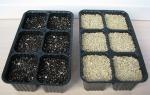 Как выращивать примулу из семян в домашних условиях?