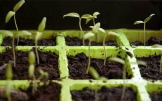 Как выращивать семена в домашних условиях?