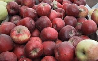 Какой сорт яблонь хороший?