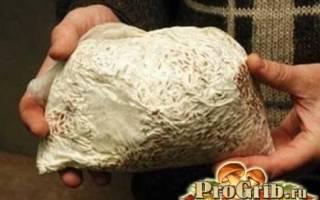 Как выращивать подберезовики в домашних условиях?