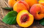 Как выращивать в домашних условиях персики?