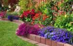 Как правильно посадить фруктовый сад