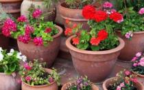 Какие растения можно выращивать в горшках на улице?