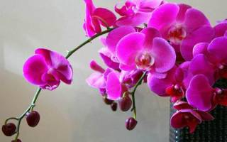 В чем лучше выращивать орхидеи в домашних условиях