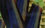 Ранние сорта баклажанов