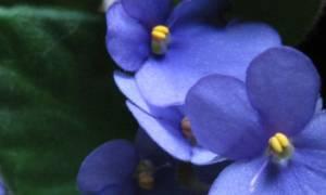 Как сохранить комнатные цветы уезжая в отпуск