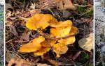 Выращивать грибы в домашних