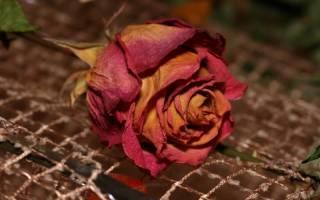 Как правильно сушить лепестки роз
