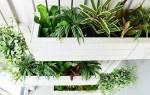 Вертикальные лечебные сады