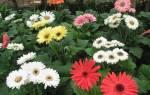 Сообщество в котором выращивают культурные растения это