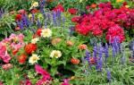 Двулетние растения список