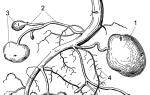 У картофеля выращиваемого из клубней корневая система