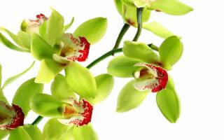 Самые дорогие комнатные растения