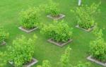 Планировка фруктового сада на участке